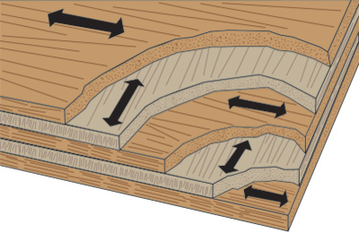 Plywood grain structure illustration